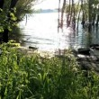 Stock Video: Flooded shoreline of river Rhine