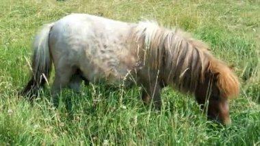 Pony — Stock Video