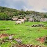 Cattle Farm — Stock Photo
