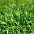 Stock Photo: Lush Grass