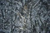 Ammonite — Stock Photo