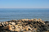Stony Beach — Stock Photo