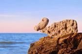 Stones Duck — Stockfoto