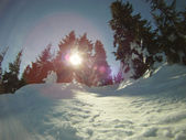Sun Shine through trees — Stockfoto