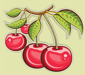 Red cherries .Vector fruits isolated for design — Stock Vector
