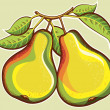 Royalty-Free Stock Vector Image: Pears illustration.Vector fresh fruits illustration