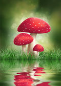 Fly Agaric Mushrooms. — Stock Photo