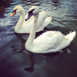 White Swans — Stock Photo #27462899