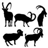 Ibex — Stock Vector