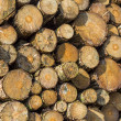 Lumber wood — Stock Photo