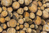 Madeira madeira — Fotografia Stock