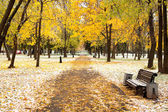 Picturesque park in Winter — Stock Photo