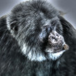 Stock Photo: Chimpanzee creative and abstract Photo