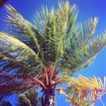 Palms — Stock Photo