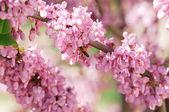Albero in fiore con un'ape — Foto Stock