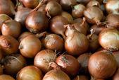 Dry onions — Stock Photo