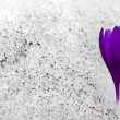 Royalty-Free Stock Photo: Snow Flower