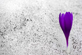 Snow Flower — Stock Photo