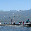 Seagulls and canoe — Stock Photo