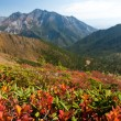 Colorful fall in the mountains - Foto Stock