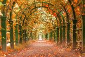 Autumn garden tunnel — Stock Photo