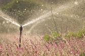 花のフィールドの灌漑 — ストック写真