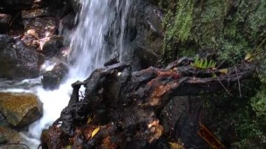 Autumn leaves in the mountains of Portugal — Stock Video