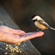 Bird on Hand — Stock Photo