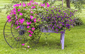 Květiny na displeji — Stock fotografie