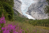 Jostedal glacier with pink flowers in Norway, Scandinavia, Europe — Stock Photo