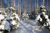 Forest in winter — Stok fotoğraf