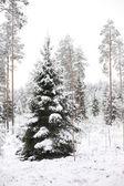 Snowy Christmas tree — Stok fotoğraf