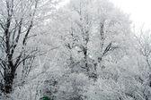 зимние деревья — Стоковое фото