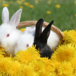 Stock Photo: Bunnies basket