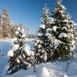 Winter scene — Stock Photo #23038836