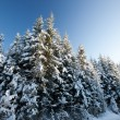 Winter scene — Stock Photo #23039078