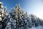 Vinter scen — Stockfoto