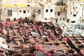 Leder tränkt in fes, marokko — Stockfoto
