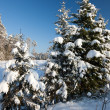 Winter scene — Stock Photo #25165507