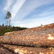 Timber resources — Stock Photo