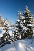 Zimní scéna — Stock fotografie