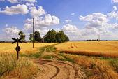 Oude boerderij, omgeven door velden van tarwe — Stockfoto