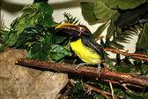 Pájaro — Foto de Stock
