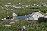 Ruisseau de montagne — Photo