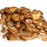 Side View Of Maitake Mushroom — Stock Photo #35571621