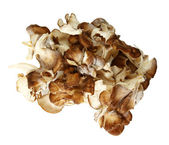 Top Down View Of Maitake Mushroom Pieces — Stock Photo