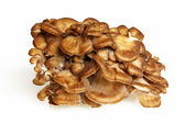 Side View Of Maitake Mushroom — Stock Photo
