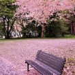 Cherry blossom time — Stock Photo #23947579
