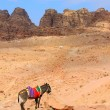 Stock Photo: Donkey in Petra, Jordan