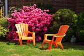Azalea flowers — Stock Photo
